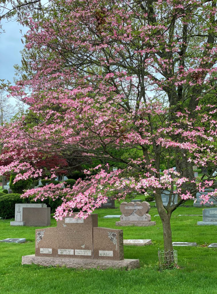 North Lawn Cemetery 19