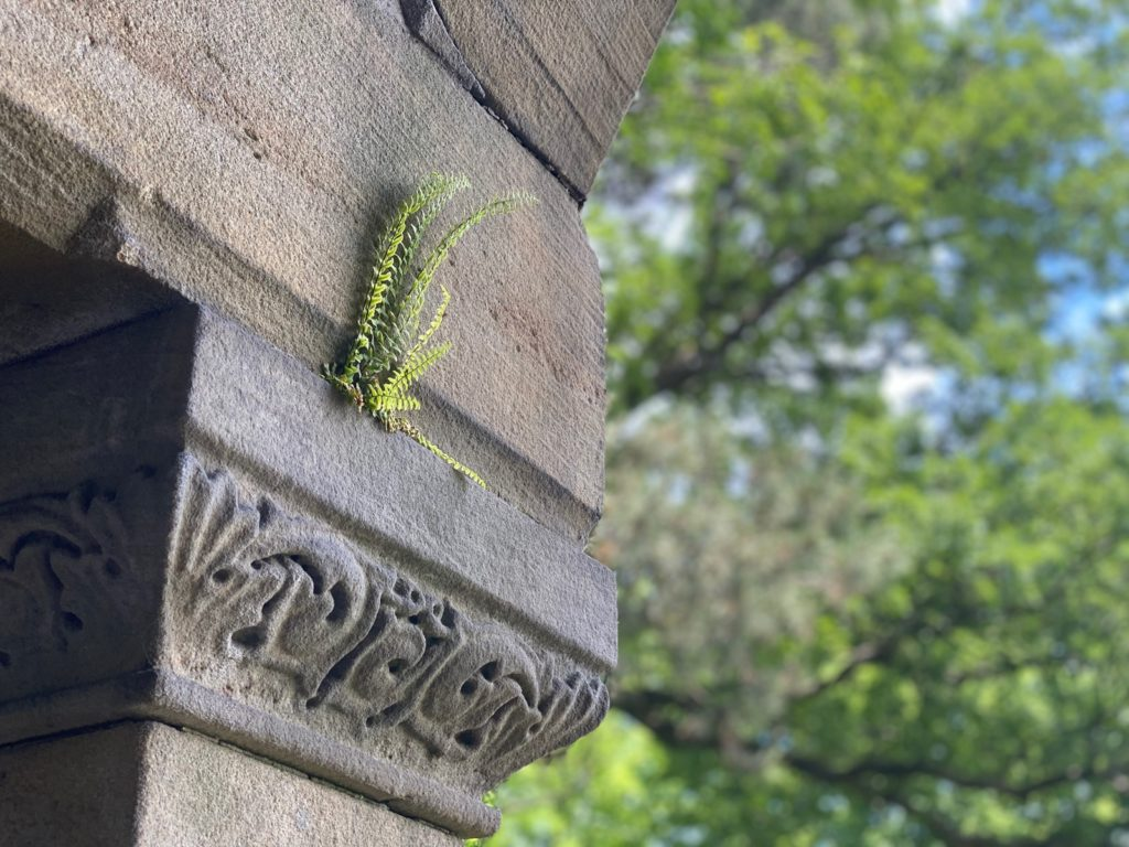 West Lawn Cemetery 11
