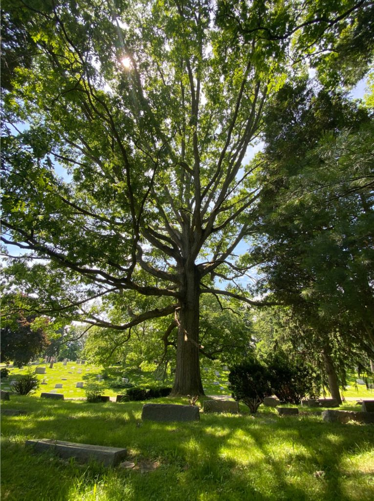 West Lawn Cemetery 27